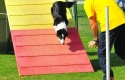 Minnie in Zona agility